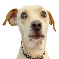Bild des Office Hundes